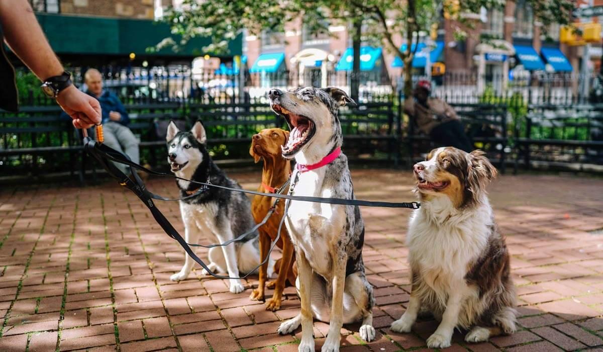 Saints Dogs Rock
