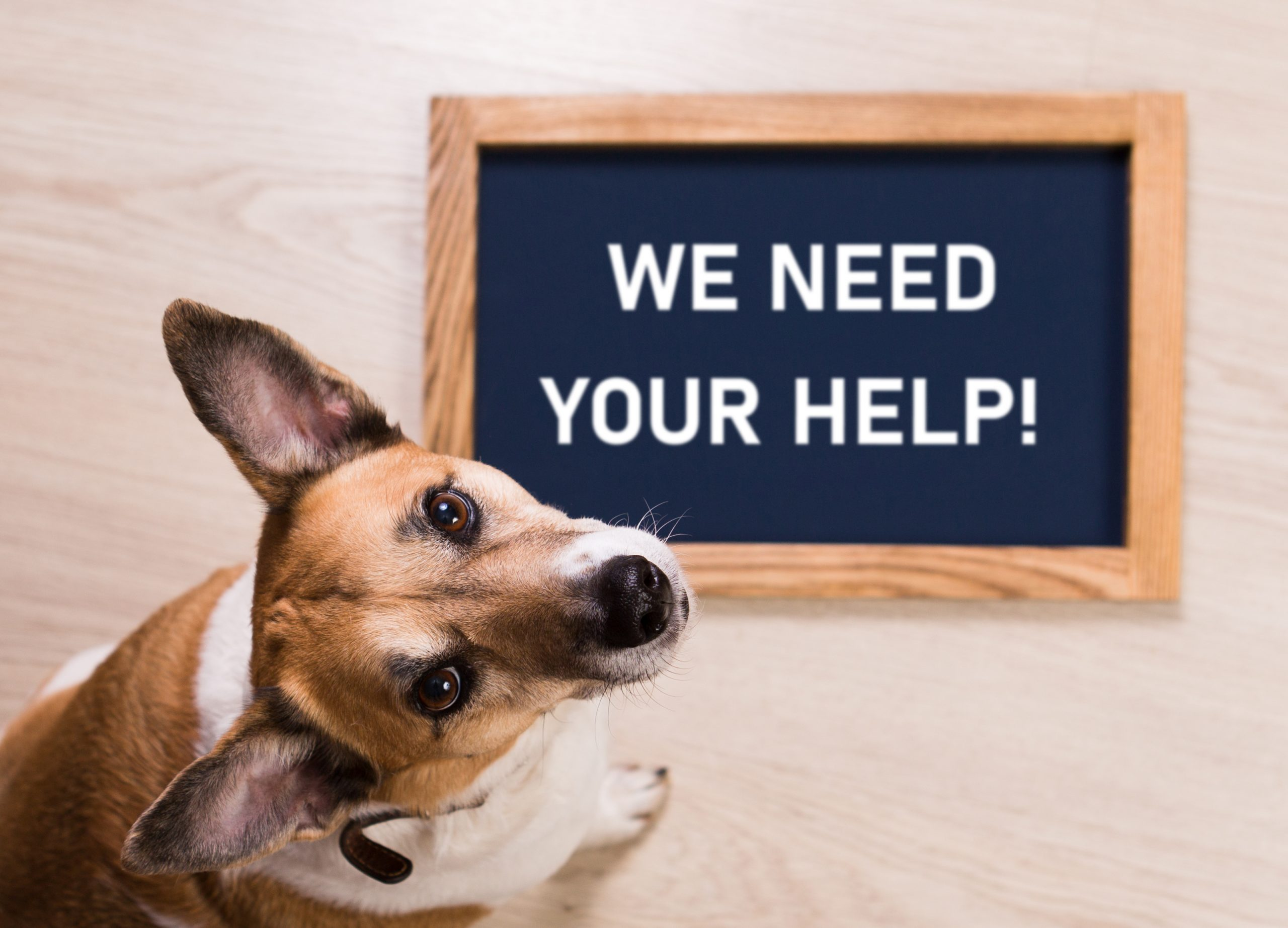 Support our Rescue!