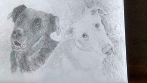 sketch-8